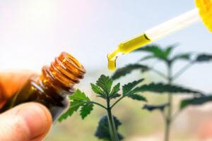 Antibacterial CBD Ointment